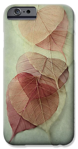 Leaves iPhone Cases - Among Shades iPhone Case by Maggie Terlecki