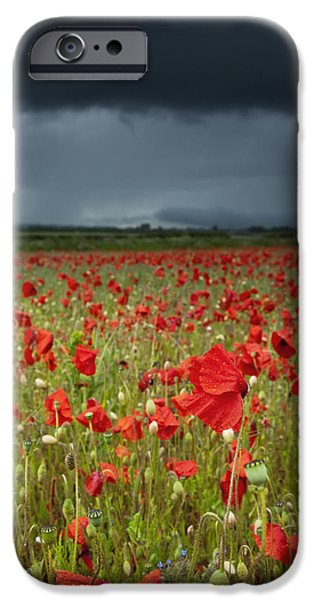 Ground Level iPhone Cases - An Abundance Of Poppies In A Field iPhone Case by John Short
