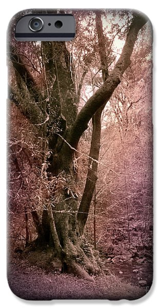 Windy iPhone Cases - Ancient Tree by a Stream iPhone Case by Laura Iverson