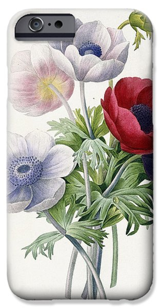 Flora Drawings iPhone Cases - Anemone Simple iPhone Case by Pierre Joseph Redoute