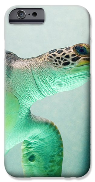 Reptiles iPhone Cases - Angel 2 iPhone Case by Skip Hunt
