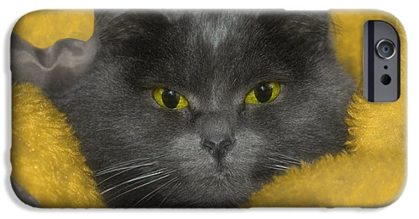 Recently Sold -  - Gray Hair iPhone Cases - Angel Eyes iPhone Case by Joann Vitali