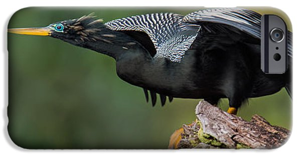 Anhinga iPhone Cases - Anhinga Anhinga Anhinga, Costa Rica iPhone Case by Panoramic Images