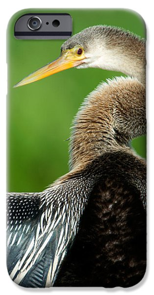 Anhinga iPhone Cases - Anhinga Anhinga Anhinga, Pantanal iPhone Case by Panoramic Images