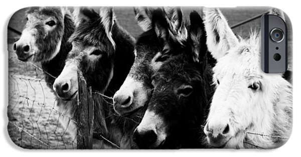 One iPhone Cases - Animal donkey farm iPhone Case by Jumnian Barisee