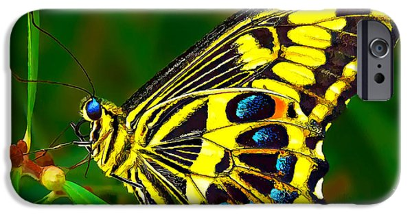 Blue Swallowtail iPhone Cases - Anise Swallowtail Butterfly 1 iPhone Case by Bill Caldwell -        ABeautifulSky Photography