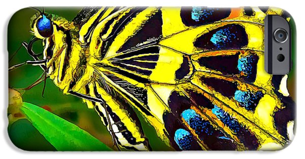 Blue Swallowtail iPhone Cases - Anise Swallowtail Butterfly 2 iPhone Case by Bill Caldwell -        ABeautifulSky Photography