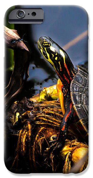 Ant iPhone Cases - Ant Meets Turtle iPhone Case by Bob Orsillo