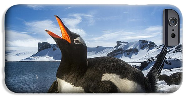 World No. 1 iPhone Cases - Antarctica, Livingstone Island, Flash iPhone Case by Paul Souders