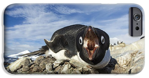 World No. 1 iPhone Cases - Antarctica, Petermann Island, Adelie iPhone Case by Paul Souders