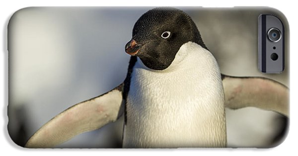 Close Focus Nature Scene iPhone Cases - Antarctica, Petermann Island, Close-up iPhone Case by Paul Souders