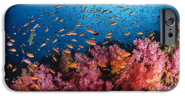 Animal Themes iPhone Cases - Anthias Fish And Soft Corals, Fiji iPhone Case by Todd Winner