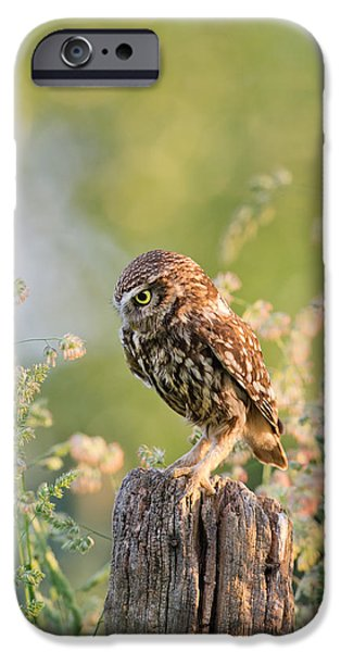 Recently Sold -  - Animals Photographs iPhone Cases - Anticipation - Little Owl staring at its Prey iPhone Case by Roeselien Raimond