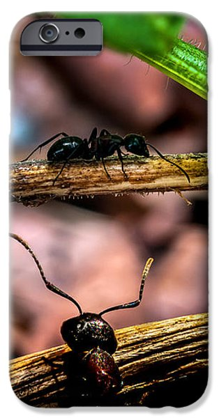 Ant iPhone Cases - Ants Adventure iPhone Case by Bob Orsillo
