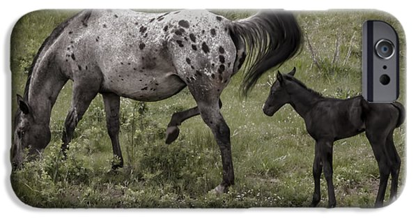 Agriculture iPhone Cases - Appaloosa and Baby iPhone Case by Janice Rae Pariza