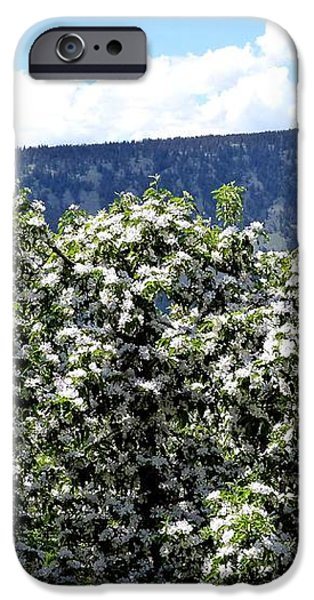 Apple Trees In Bloom     iPhone Case by Will Borden