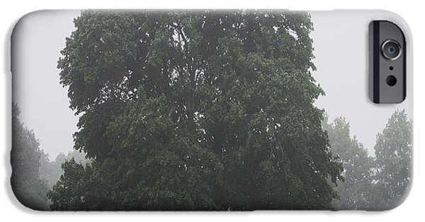 Fog Mist iPhone Cases - Appleton Tree Rainy Day iPhone Case by David Stone