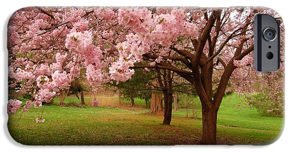 Cherry Blossoms Photographs iPhone Cases - Approach Me - Holmdel Park iPhone Case by Angie Tirado