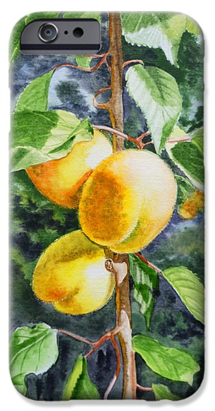 Apricots iPhone Cases - Apricots in the Garden iPhone Case by Irina Sztukowski