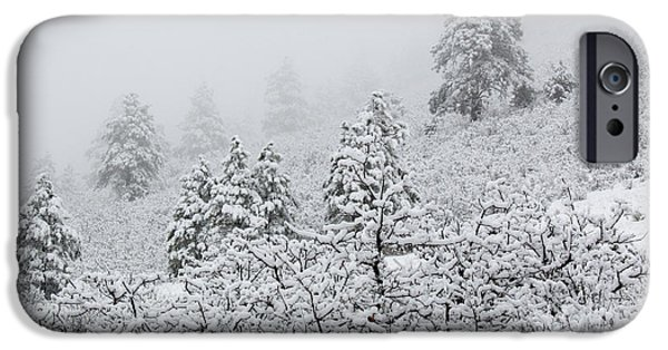 Winter Storm iPhone Cases - April Snowstorm in the Pike National Forest of Colorado iPhone Case by Steve Krull