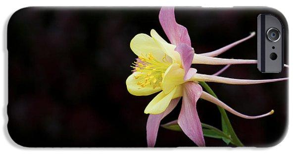 Botanical iPhone Cases - Aquilegia  iPhone Case by Tim Gainey