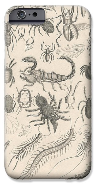 Botanical Drawings iPhone Cases - Arachnides. Myriapoda iPhone Case by Captn Brown
