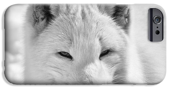 Fauna iPhone Cases - Arctic Fox iPhone Case by Eunice Gibb