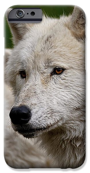 Arctic Wolf Pair iPhone Case by Michael Cummings