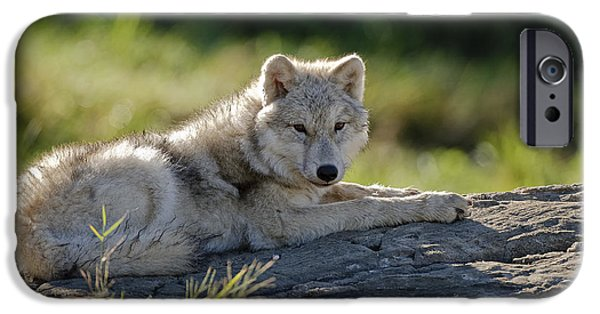 Wolf Pics Mixed Media iPhone Cases - Arctic Wolf Pup iPhone Case by Michael Cummings