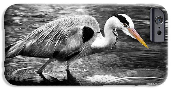 Grey Photographs iPhone Cases - Ardea Cinerea - Grey Heron iPhone Case by Mark Rogan