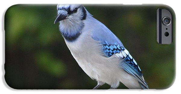 Animals Photographs iPhone Cases - Are You Watching Me  iPhone Case by Ruth  Housley