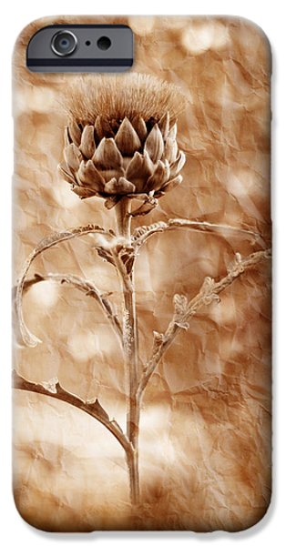 Plant iPhone Cases - Artichoke Bloom iPhone Case by La Rae  Roberts