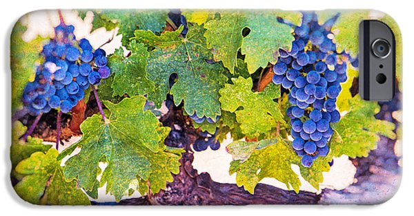 Viticulture iPhone Cases - Artistic Grape Vines iPhone Case by Garry Gay