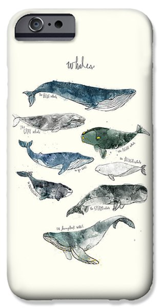 Charts iPhone Cases - Whales iPhone Case by Amy Hamilton
