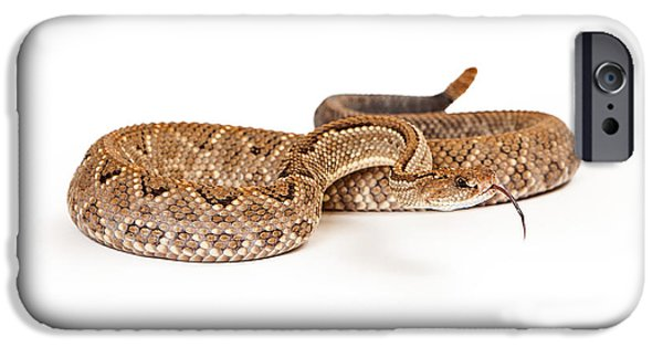 Serpent Photographs iPhone Cases - Aruba Rattlesnake Coiled Tongue Out iPhone Case by Susan  Schmitz
