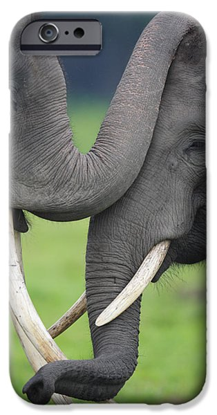Asian Elephant Greeting iPhone Case by Cyril Ruoso