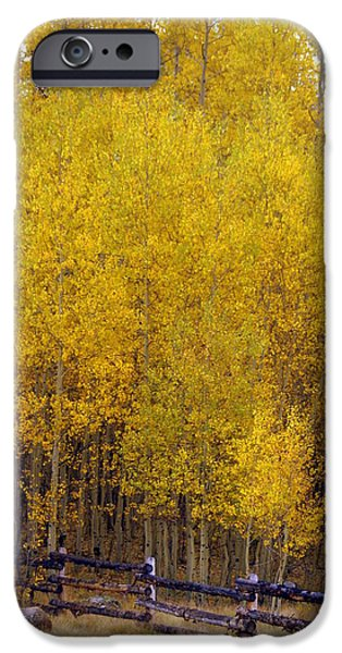 Aspen Fall 2 iPhone Case by Marty Koch
