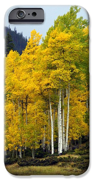 Aspen Fall 3 iPhone Case by Marty Koch