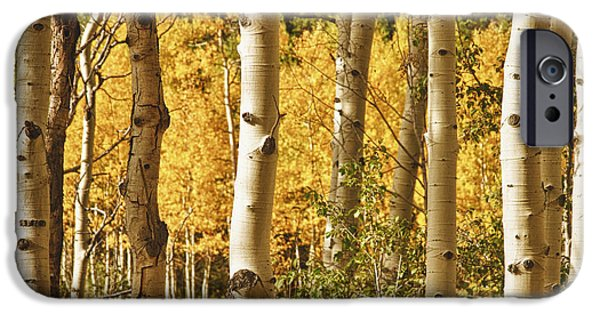 Tree Art Print iPhone Cases - Aspen Gold iPhone Case by James BO  Insogna
