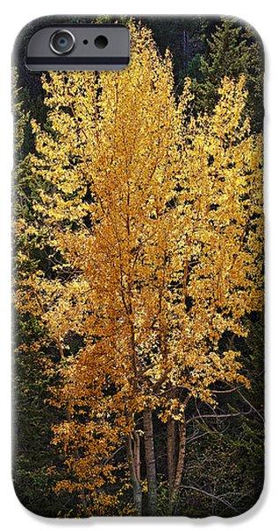 Aspen Gold iPhone Case by Kelley King