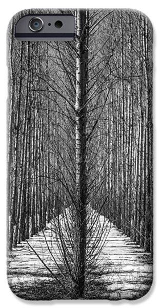 Interior Scene iPhone Cases - Aspen Rows iPhone Case by Paul Freidlund