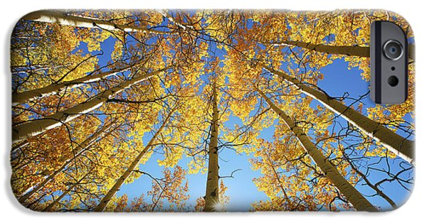 Bright Photographs iPhone Cases - Aspen Tree Canopy 2 iPhone Case by Ron Dahlquist - Printscapes