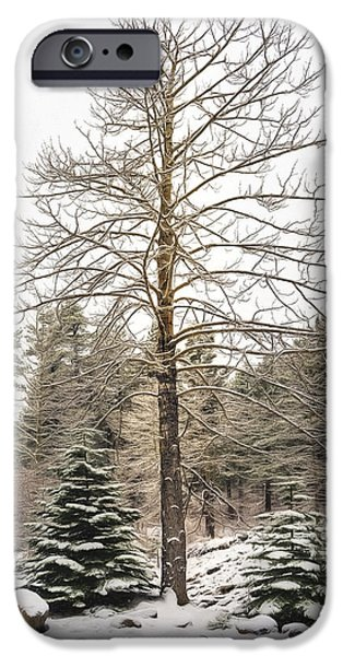 Snowy Day iPhone Cases - Aspen Tree in a Pine Forest iPhone Case by Maria Coulson