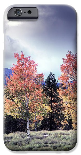 Aspens in Autumn Light iPhone Case by Leland D Howard