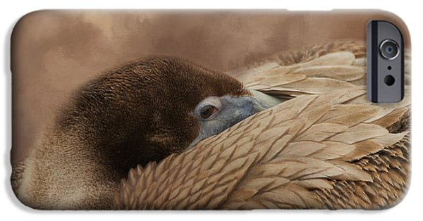 Fauna iPhone Cases - At Rest iPhone Case by Kim Hojnacki