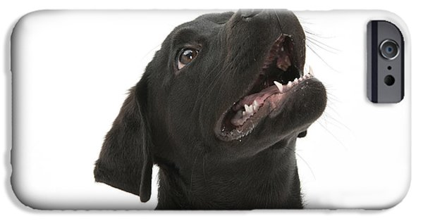 Domesticated Animals iPhone Cases - Attentive Black Lab Pup iPhone Case by Mark Taylor