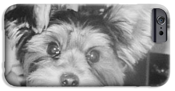 Puppies iPhone Cases - Audi  iPhone Case by Fitzgerald Hicks