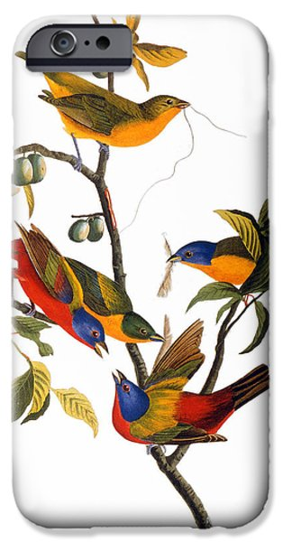 Audubon iPhone Cases - Audubon: Bunting, 1827 iPhone Case by Granger