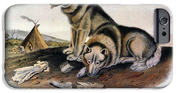 Arctic Dog iPhone Cases - Audubon: Eskimo Dog iPhone Case by Granger