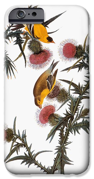 Thistle iPhone Cases - Audubon: Goldfinch iPhone Case by Granger